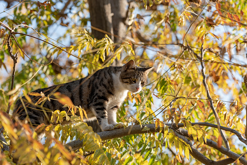 A beautiful bright red cat with yellow eyes and pink nose is on a tree with white snow and frost in winter. Homeless cat in city park. cat on a tree with yellow foliage