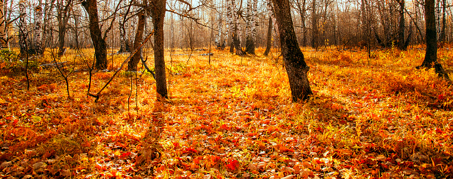 1038696838 istock photo Beautiful bright sunny colorful autumn landscape. Morning among trees with foliage in nature outdoors in an orange-yellow golden forest in fine warm weather in October in the fall season 1187576164