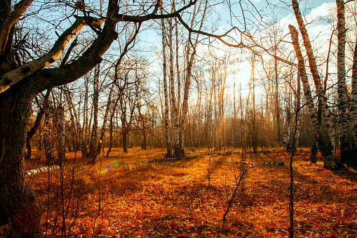 1038696838 istock photo Beautiful bright sunny colorful autumn landscape. Morning among trees with foliage in nature outdoors in an orange-yellow golden forest in fine warm weather in October in the fall season 1187585923