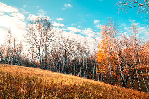 1038696838 istock photo Beautiful bright sunny colorful autumn landscape. Morning among trees with foliage in nature outdoors in an orange-yellow golden forest in fine warm weather in October in the fall season 1187610170