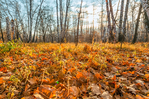 1038696838 istock photo Beautiful bright sunny colorful autumn landscape. Morning among trees with foliage in nature outdoors in an orange-yellow golden forest in fine warm weather in October in the fall season 1188343878