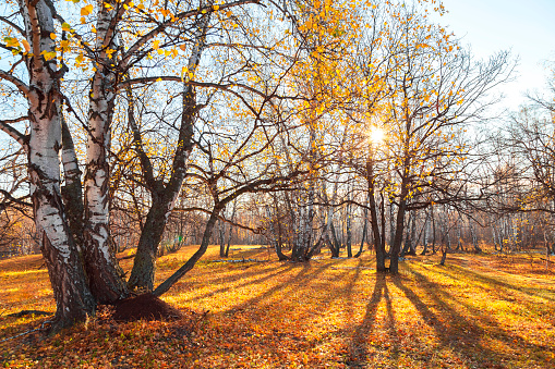 1038696838 istock photo Beautiful bright sunny colorful autumn landscape. Morning among trees with foliage in nature outdoors in an orange-yellow golden forest in fine warm weather in October in the fall season. Russia, Saratov region 1188343879