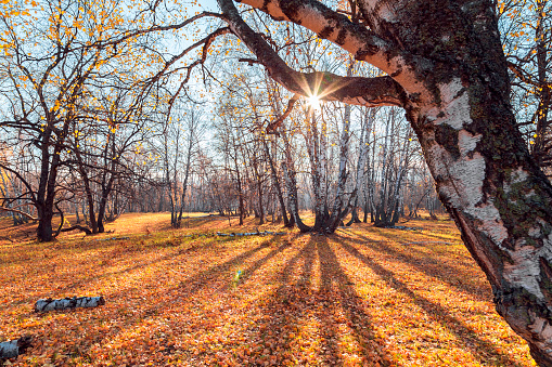 1038696838 istock photo Beautiful bright sunny colorful autumn landscape. Morning among trees with foliage in nature outdoors in an orange-yellow golden forest in fine warm weather in October in the fall season. Russia, Saratov region 1188343882