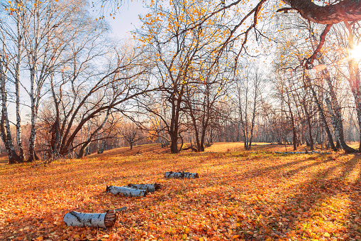 1038696838 istock photo Beautiful bright sunny colorful autumn landscape. Morning among trees with foliage in nature outdoors in an orange-yellow golden forest in fine warm weather in October in the fall season. Russia, Saratov region 1188343885