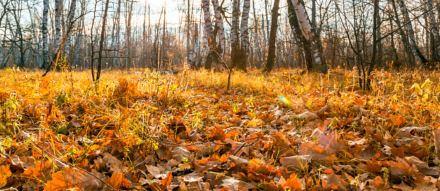 1038696838 istock photo Beautiful bright sunny colorful autumn landscape. Morning among trees with foliage in nature outdoors in an orange-yellow golden forest in fine warm weather in October in the fall season 1188354498