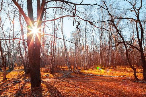 1038696838 istock photo Beautiful bright sunny colorful autumn landscape. Morning among trees with foliage in nature outdoors in an orange-yellow golden forest in fine warm weather in October in the fall season. Russia, Saratov region 1190808764