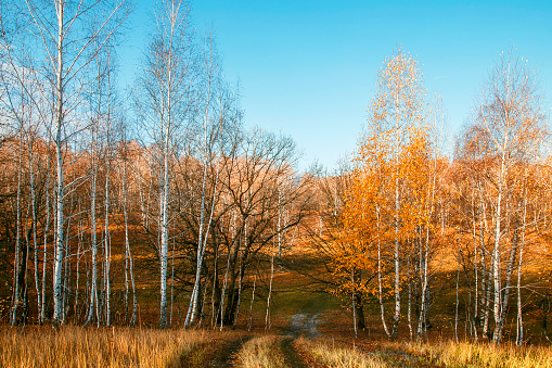 1038696838 istock photo Beautiful bright sunny colorful autumn landscape with a road. Morning among trees with foliage in nature outdoors in an orange-yellow golden forest in fine warm weather in October in the fall season 1187616908