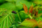 colored big beetle sits on a leaf in the nature