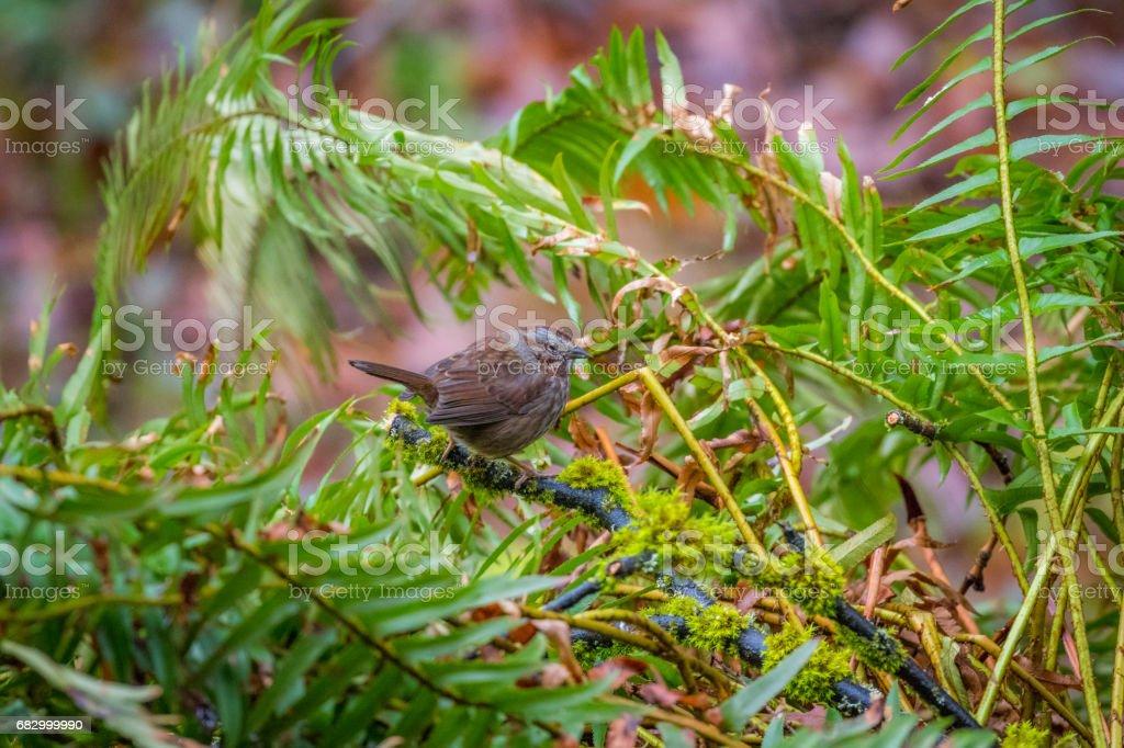 Beautiful brown bird on the fern. royalty-free stock photo
