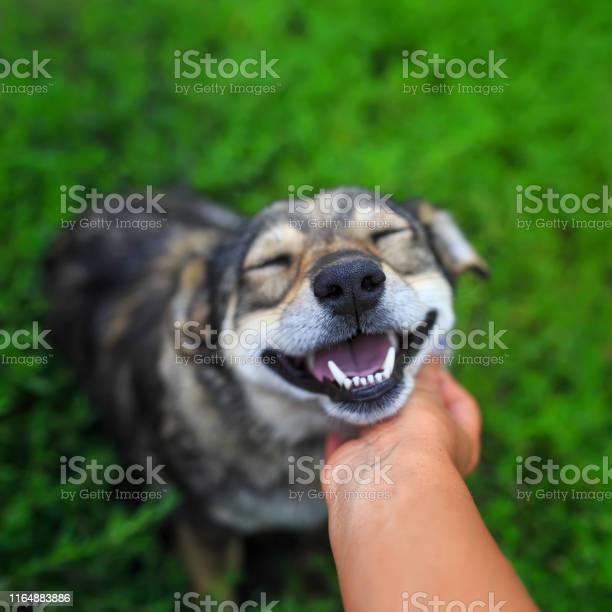 Beautiful brown dog put his head on the palm of the person and with picture id1164883886?b=1&k=6&m=1164883886&s=612x612&h=ixy2jcvbcun5auwjogj  pjwpbvxxhpzcrjgipp5vkw=