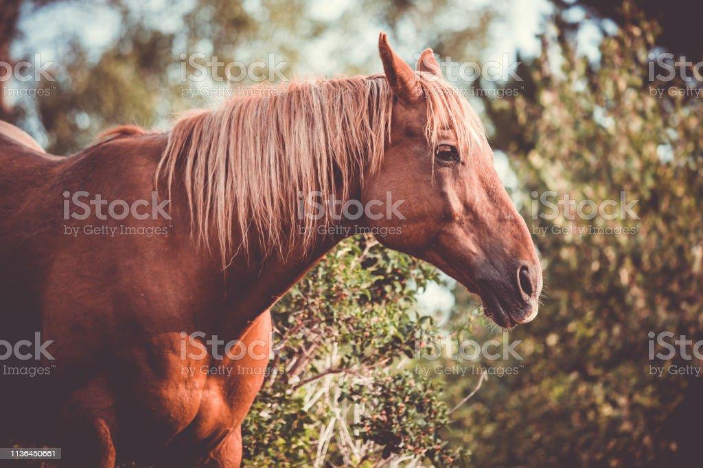 Beautiful Brown Horse Blonde Hair