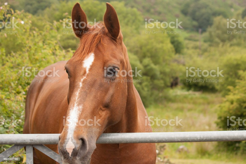 A beautiful brown horse portrait stock photo