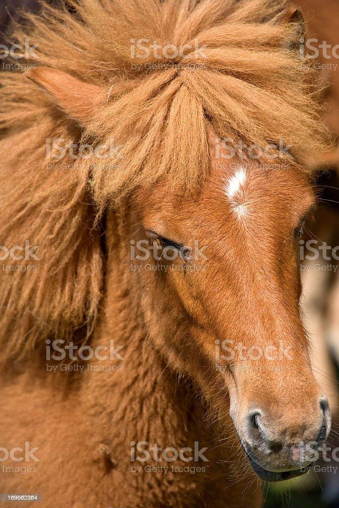Schöne Braune Pferde – Foto