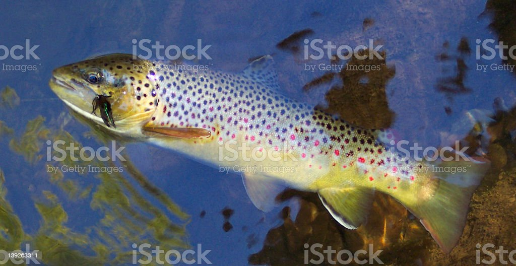 Beautiful Brown stock photo
