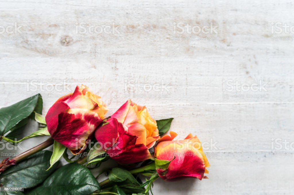 Beautiful bunch of two colored roses stock photo