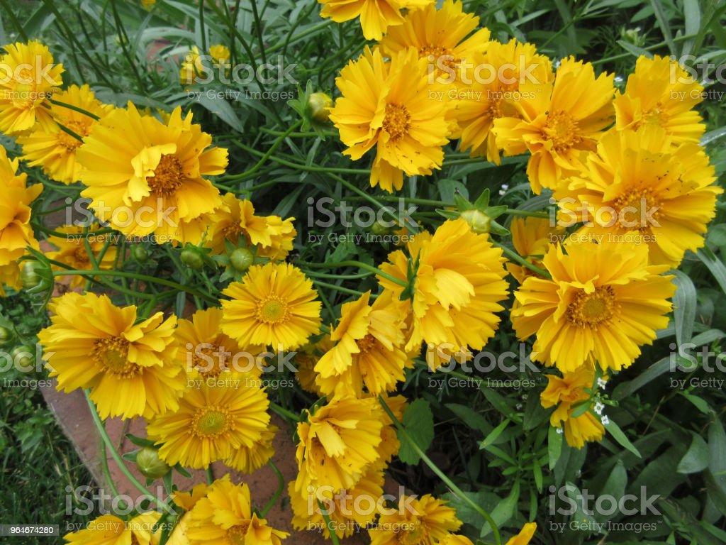 Beautiful Bunch of Yellow Flowers royalty-free stock photo