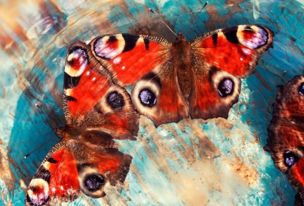 schöne schmetterlinge der pfau auge sitzt auf einer blau lackierten holzoberfläche in die strahlen und die blendung der sonne - pfau bilder stock-fotos und bilder