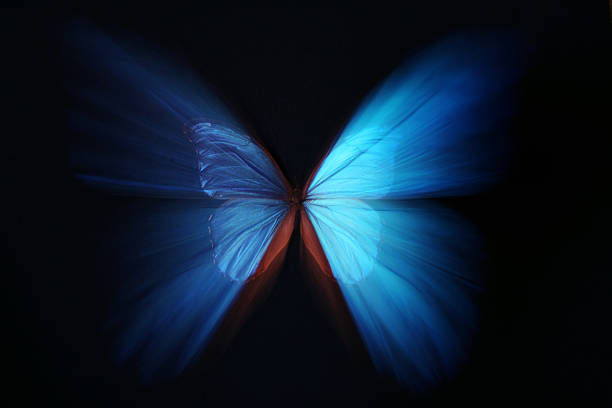 Beautiful butterfly blue abstract with zoom effect picture id144962654?b=1&k=6&m=144962654&s=612x612&w=0&h=buphx yh3dzu14rdlsrxwyxrlqgg5420lgwcrglduha=