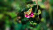 beautiful butterfly flying over a flower, closeup. Spring. Nature. Sunny day. Wallpaper. Background.