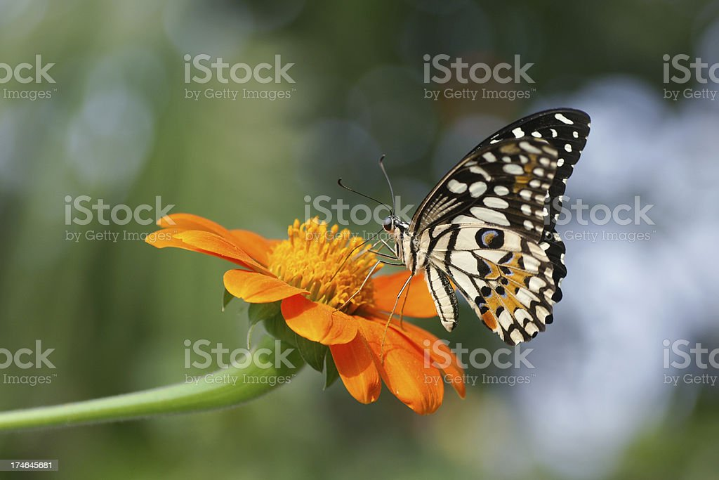 Beautiful butterfly flying stock photo