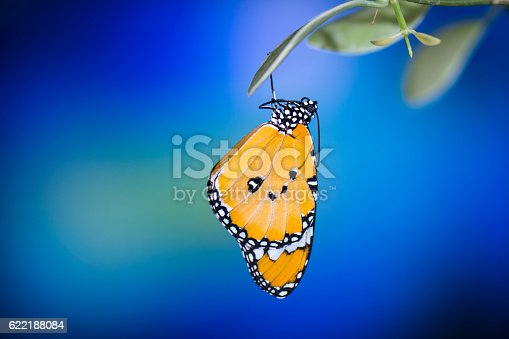 538988558 istock photo Beautiful butterfly hanging on leaves 622188084