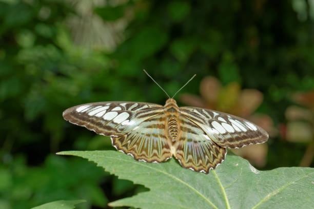 Schöne Schmetterling vor grünem Hintergrund – Foto