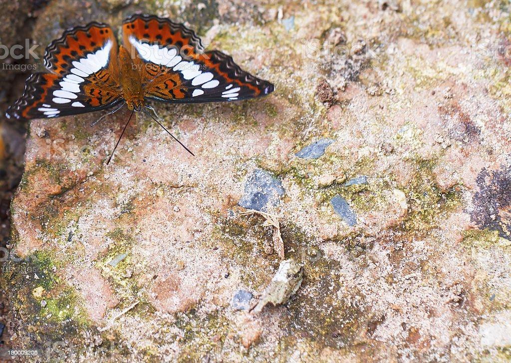 아름다운 나비 자연 royalty-free 스톡 사진
