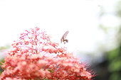 Bokeh on butterfly with blurred flower in the garden, beautiful animal life in the park