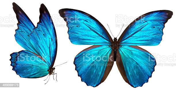 Photo of beautiful butterfly isolated on white