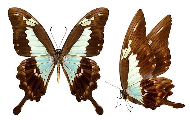 Beautiful butterfly isolated on white picture id459490945?b=1&k=6&m=459490945&s=612x612&w=0&h=eu x jtiyei2wdgthob8uv58rnmyltchhmvngbsdldu=
