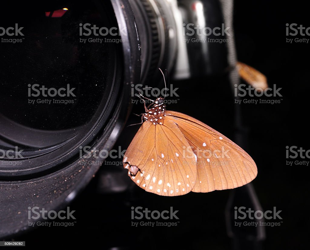 Beautiful butterfly on a camera lens stock photo
