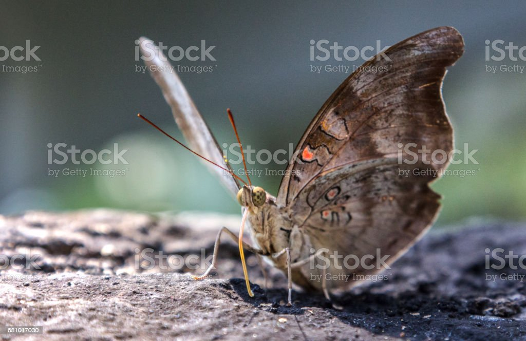 Beautiful butterfly on a rock. royalty-free stock photo