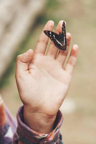 Beautiful butterfly on girl hand stylish happy woman holding apatura picture id1049959430?b=1&k=6&m=1049959430&s=612x612&w=0&h=jmcsoajgvz4v zcgk7mh77ykv41ylawzasvxqrmidng=