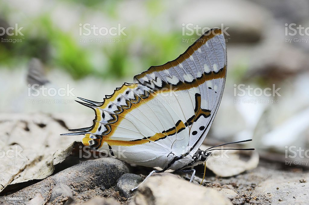 Beautiful butterfly on ground in nature royalty-free stock photo