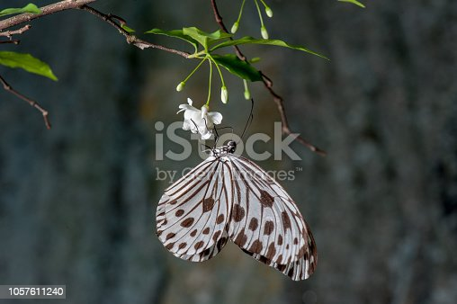 istock Beautiful Butterfly on the leaf 1057611240