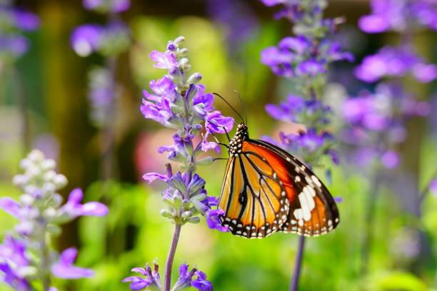 Beautiful butterfly picture id1174632662?b=1&k=6&m=1174632662&s=612x612&w=0&h=bknhsiomskrxzc19jkhkdfdflmpyt3cocckdae 3aow=