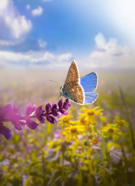 Beautiful butterfly picture id175447108?b=1&k=6&m=175447108&s=612x612&w=0&h=3oxernx1ucqesjpiwhz3djggmuoakhs4fxx3ltx5opo=