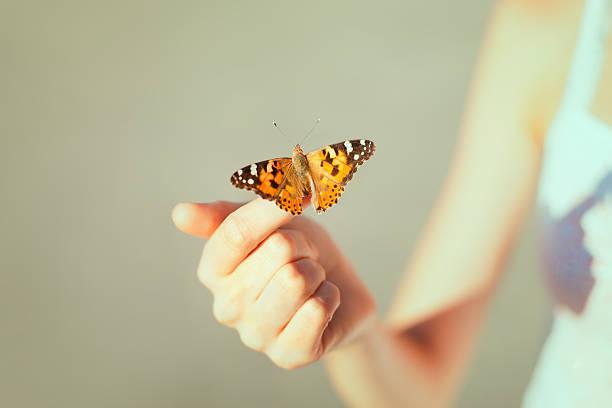 Beautiful butterfly picture id177795929?b=1&k=6&m=177795929&s=612x612&w=0&h=t 0crdciwry4328lqmxpcgqdxf4alt 2rkqynhguzmg=