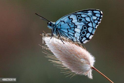 538988558 istock photo Beautiful Butterfly 488250516