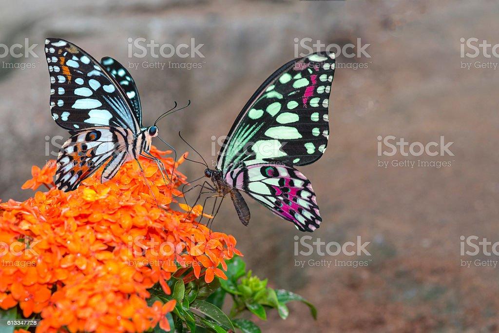 Beau papillon  photo libre de droits