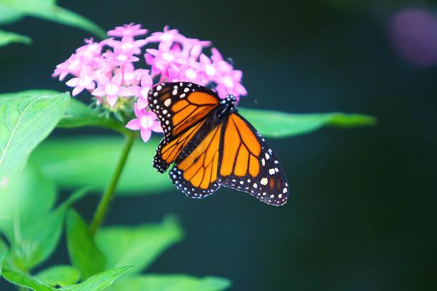 Beautiful butterfly picture id665687366?b=1&k=6&m=665687366&s=612x612&w=0&h=ipphgb2x0iiqpbaoidpxywjhgnktxtqxscicngpaobg=