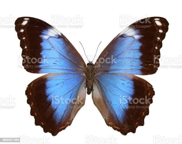 Beautiful butterfly picture id896387488?b=1&k=6&m=896387488&s=612x612&h=slnmkjyjxgo4x4lbgxudgcbg83ckjpdcnozthy0lxoc=