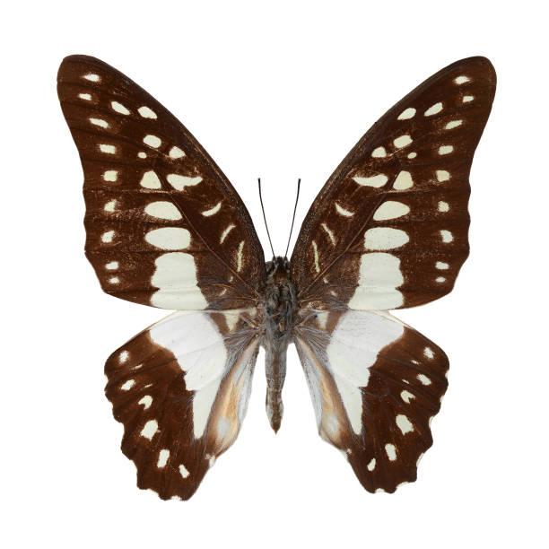Beautiful butterfly picture id899932060?b=1&k=6&m=899932060&s=612x612&w=0&h=p49txvowhd11d9kduunjywdpuclz64oq0hlbxvjs3mq=
