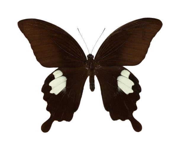 Beautiful butterfly picture id915147294?b=1&k=6&m=915147294&s=612x612&w=0&h=irc0gkmaj icqk3noawrjbktqltulygttndrur1 9ay=