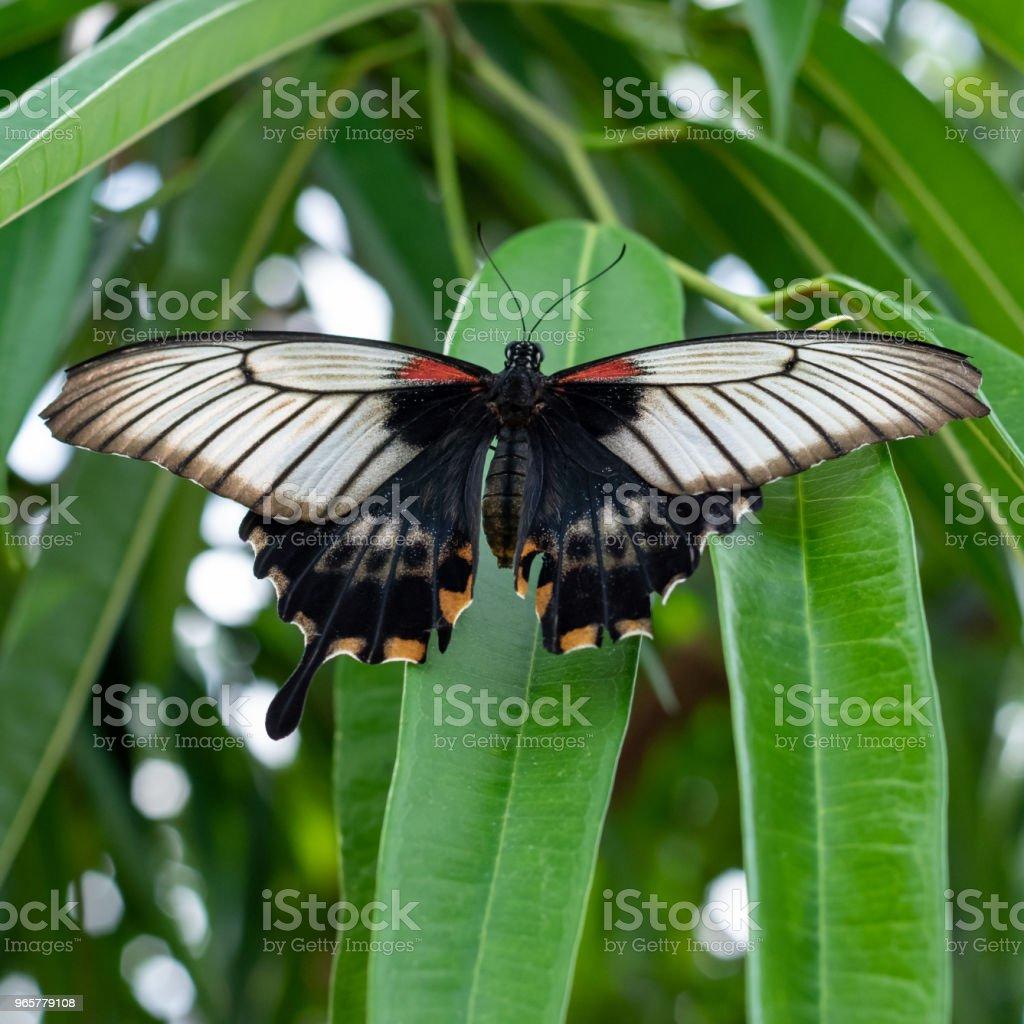 Prachtige vlinder - Royalty-free Beschrijvende kleur Stockfoto