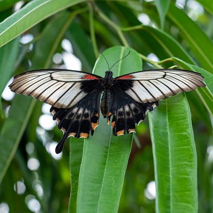 Prachtige Vlinder Stockfoto en meer beelden van Beschrijvende kleur