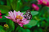 Butterfly - Insect, Flowerbed, Monarch Butterfly, Animal, Insect