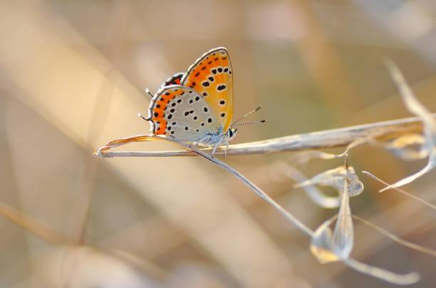 Beautiful butterfly sitting on flower picture id1197640175?b=1&k=6&m=1197640175&s=612x612&w=0&h=5jrq28 0jhzvgtm5o3vtdipe8ijsczqfcnbkuy3marm=