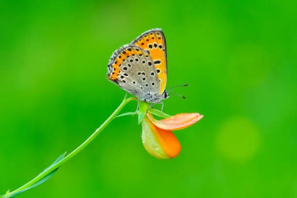 Beautiful butterfly sitting on flower picture id1197641472?b=1&k=6&m=1197641472&s=612x612&w=0&h=zync9vc 2raqe3lyxrxnlmagdh1xqsitqyjmehfkdtq=