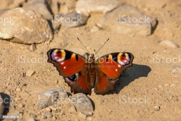 Beautiful butterfly sitting on the ground during the day picture id868209376?b=1&k=6&m=868209376&s=612x612&h=4se2ge9upnx8yxprnxzw5fj3paui otc0ytkiigzan0=